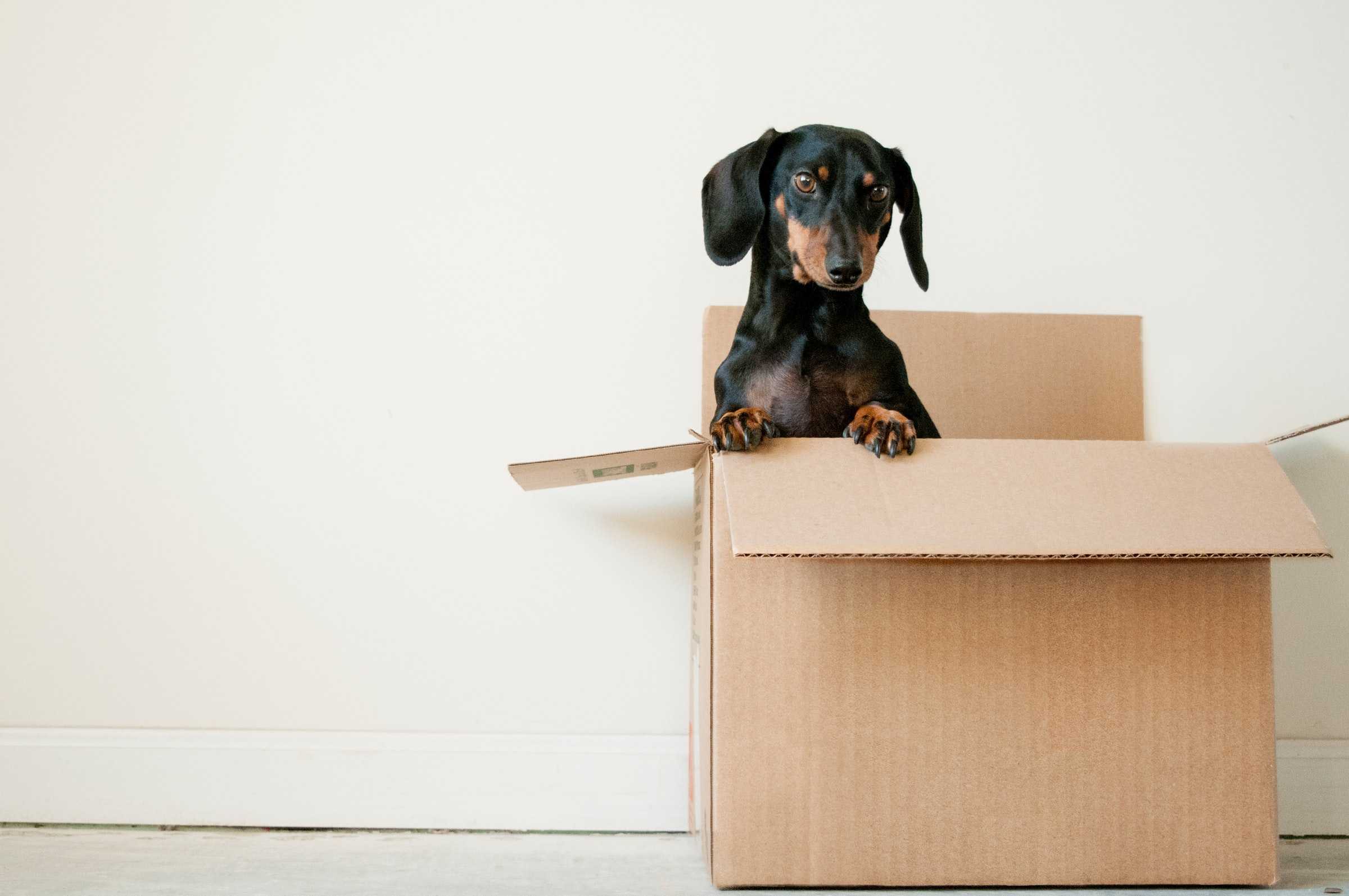 The Essentials Guide for Moving House